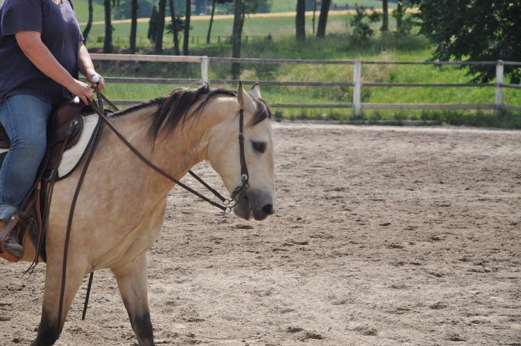 horse-1010812_1920.jpg